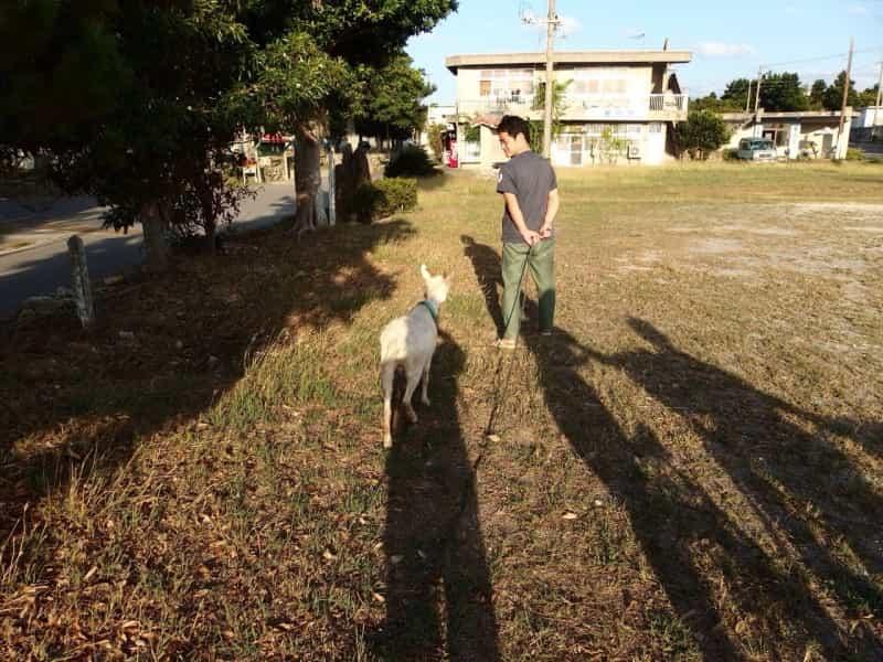ヤギと散歩している写真