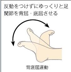 足関節の背底屈運動