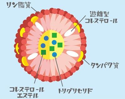 リポタンパクの一般的構造の図