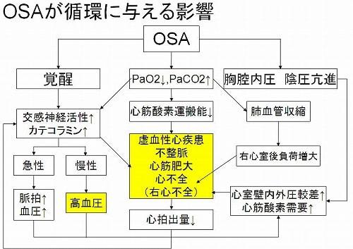 OSAが循環に与える影響