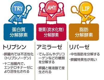 3つの消化酵素の役割説明図