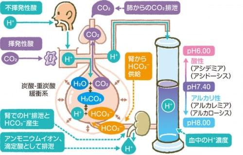 酸塩基平衡の調節のメカニズム説明図