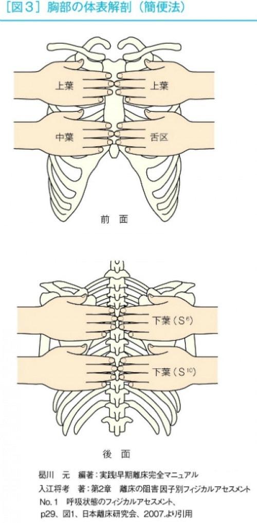 胸部の体表解剖(簡便法)