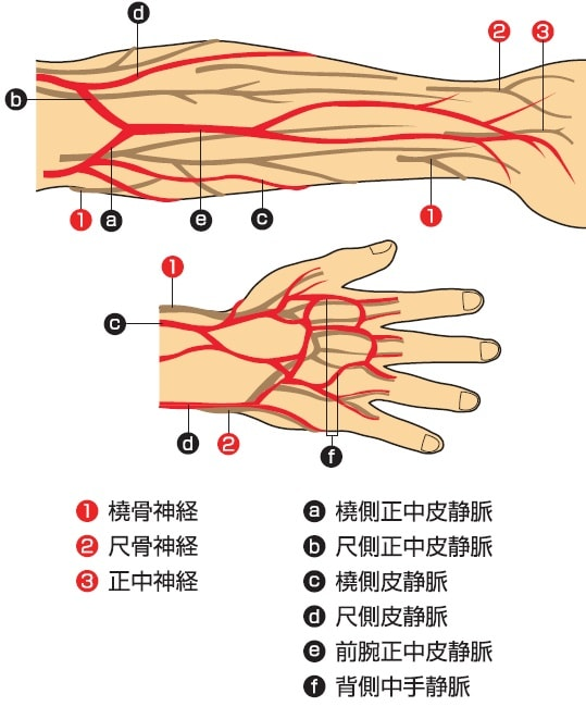血管と神経の走行