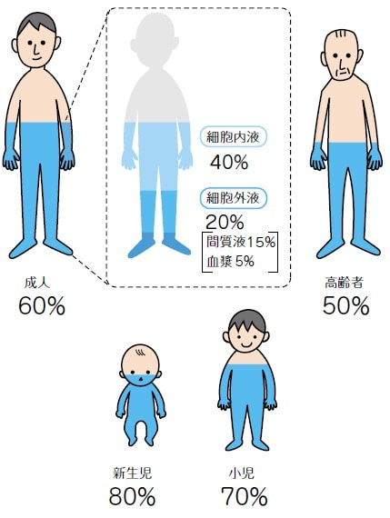 年齢別人体の水分量と体液の構成比