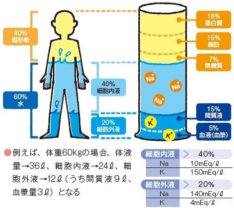 体液の分布とその比率