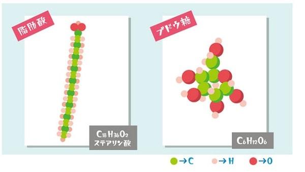 脂肪酸のひとつであるステアリン酸とブドウ糖の分子構造図
