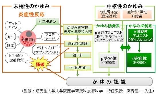 かゆみのメカニズム説明図