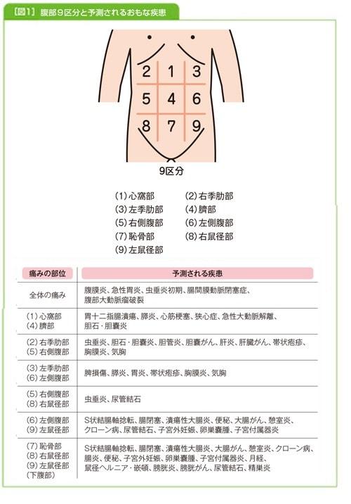 腹部の9区分