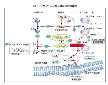 ブラジキニン産生経路と治療標的の図