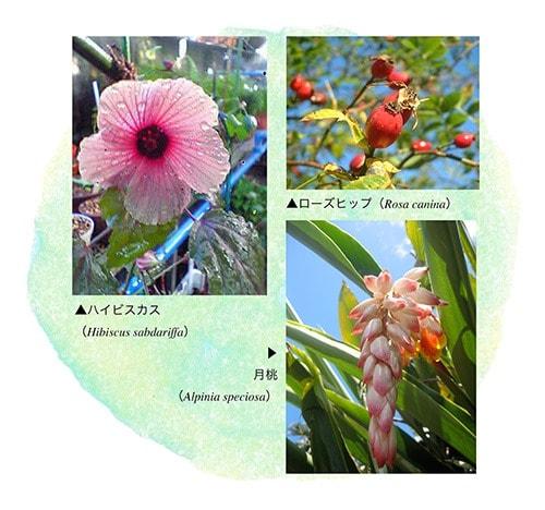 ハイビスカス、ローズヒップ、月桃の写真