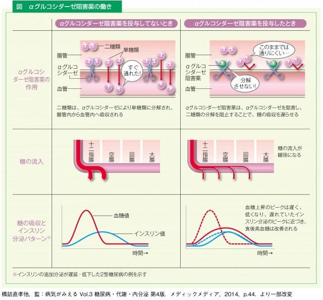 αグルコシダーゼ阻害薬の働き