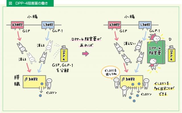 DPP-4阻害薬の働き