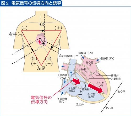 電気信号の伝導方向と誘導