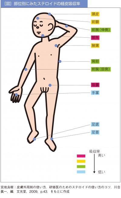 部位別にみたステロイドの経皮吸収率