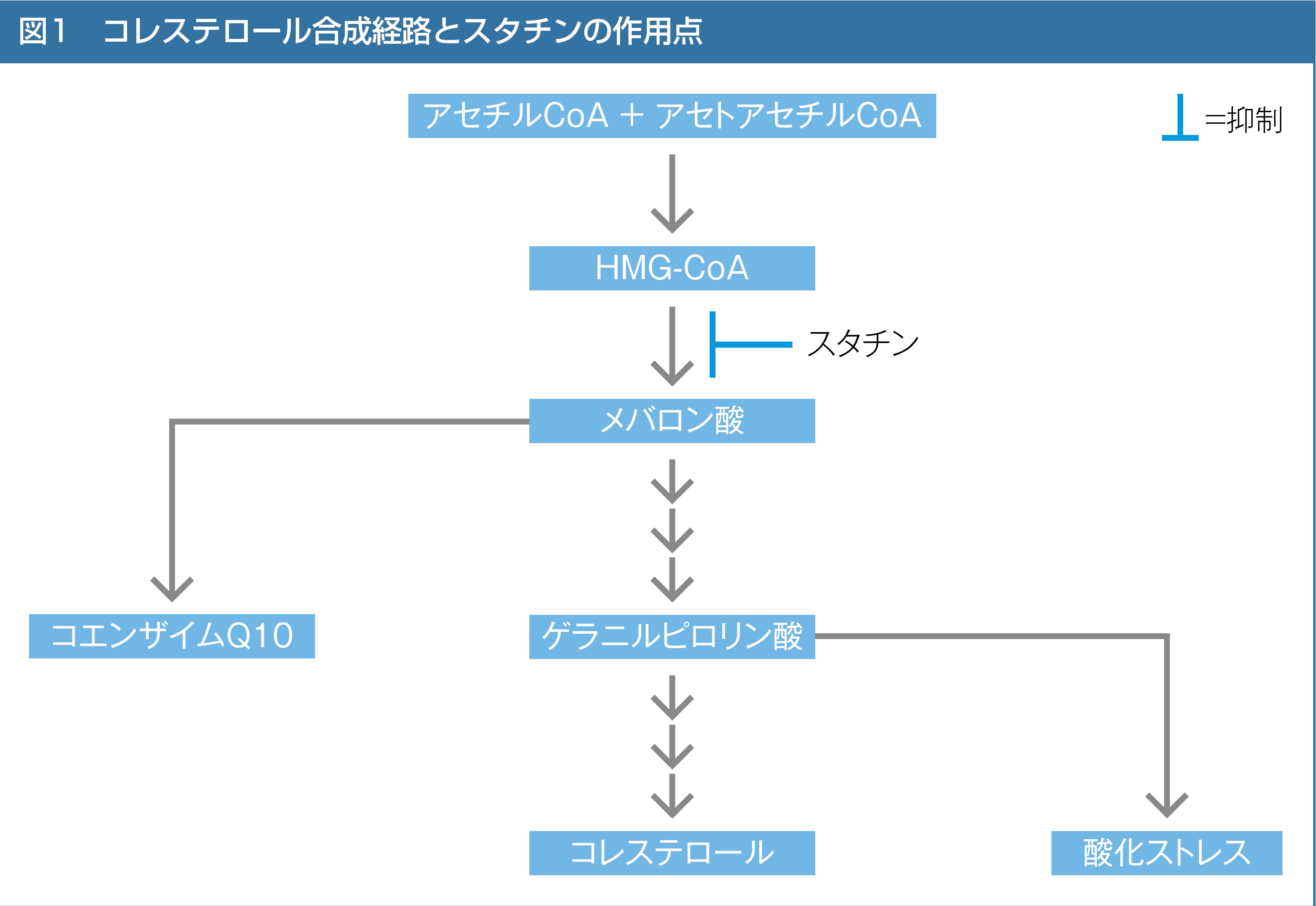 コレステロール合成経路とスタチンの作用点