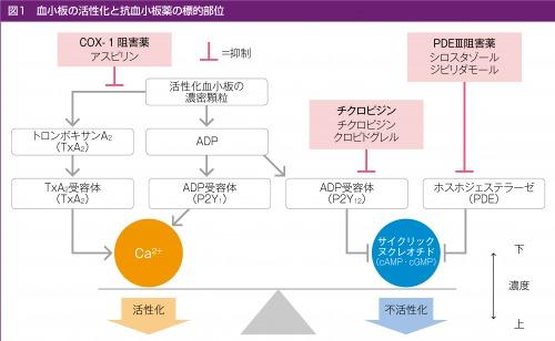 血小板の活性化と抗血小板薬の標的部位