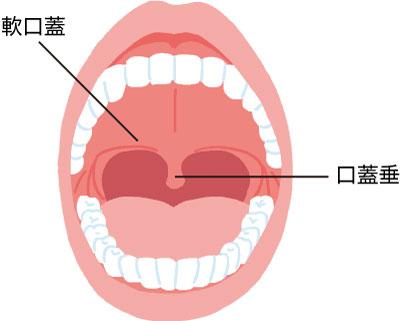 口腔内の図