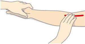 触 知 動脈 橈骨
