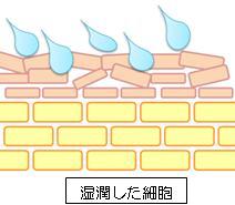 湿潤による皮膚の変化②