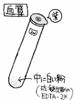 スピッツ(血算・生化)