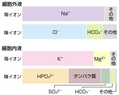 体液を構成する主な溶質の組成