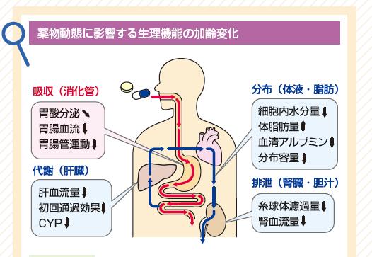 肝硬変患者における鎮痛剤の投与 文献とエビデンスに基づく推 …