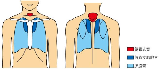 呼吸音の聴取位置