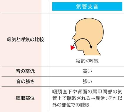 正常な気管支音の特徴