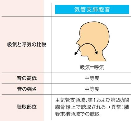 正常な気管支肺胞音の特徴