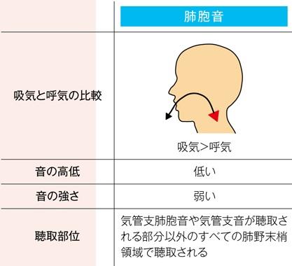 正常な肺胞音の特徴