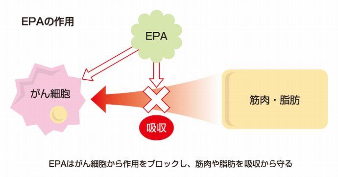 EPAの作用説明イラスト