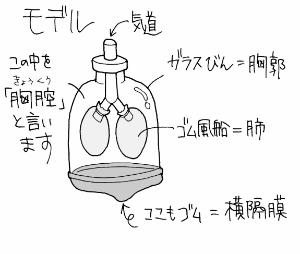 肺の全体像