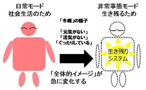 「冬眠」の様子について説明図