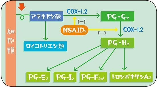 アラキドン酸カスケード説明図
