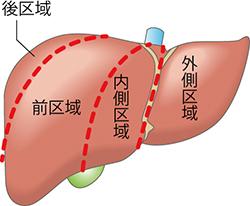 図1 肝区域