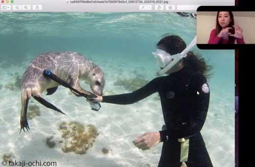『みんなが知りたい海の話-アシカ編-』課外授業イメージ